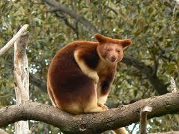Tree roo rescue