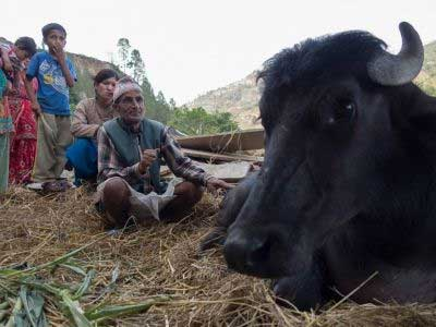 More vets head to Nepal