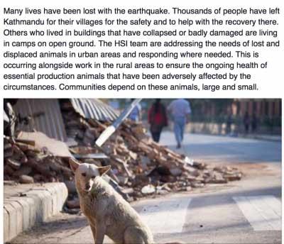 nepal dogs need help